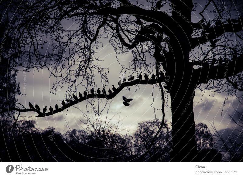 Tauben, die in einer Reihe auf einem Ast sitzen London Straße Ausflug Urlaub Baum Zweig Baumstamm Vogel Vögel fliegen Sitzen Tier Kontrast Außenaufnahme Feder