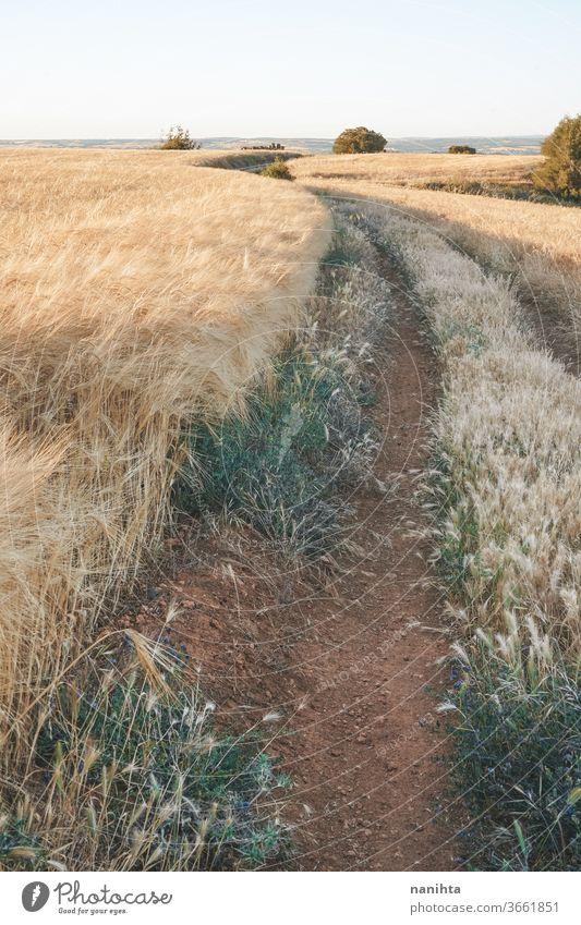 Goldene Getreidefelder in Spanien Feld Sommer Weg Landschaft Feldfrüchte Müsli Bauernhof ruhig Ort Stille Sonnenuntergang golden schön Natur natürlich im Freien