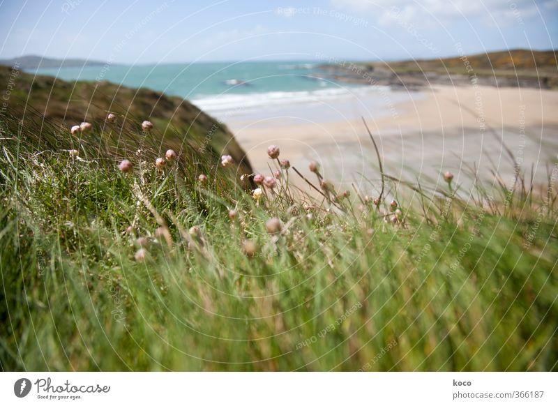 Wind und Meer Natur Landschaft Pflanze Sand Wasser Himmel Wolken Frühling Sommer Schönes Wetter Blume Gras Blüte Wiese Wellen Küste Strand Bucht Blühend