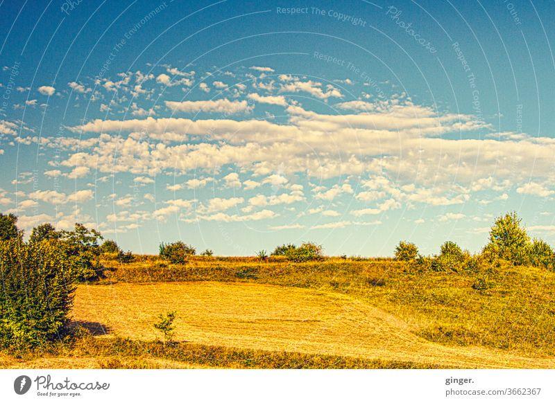 Mittelmeersteppe - Insel Pag Steppe Landschaft Außenaufnahme Menschenleer Himmel Gras Natur Pflanze Schönes Wetter Sonnenlicht Sträucher Ferne karg Farbfoto