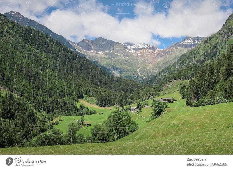 Wandern im Pflerschtal in Südtirol mit Almwiesen Tal Wiese Berge Alpen Idylle Hang Nadelwald Fichten Himmel Wolken grün Berge u. Gebirge Landschaft Wanderlust