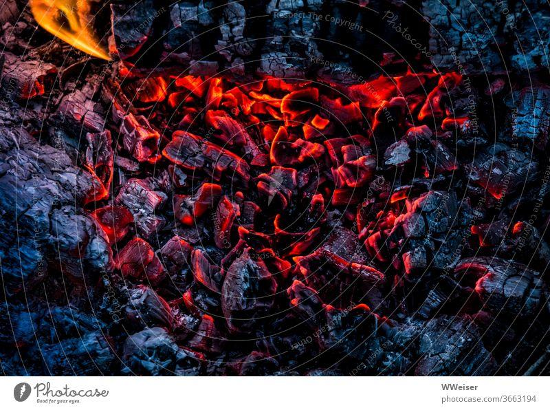 Die heißen Kohlen glühen noch Feuer Glut Flamme brennen Wärme Hitze Feuerschale Feuerstelle glühend Farbkontrast rot blau schwarz Nahaufnahme orange