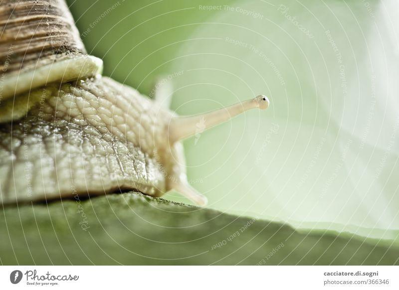 casting a glance grün Freude Tier lustig Frühling Wege & Pfade klein natürlich außergewöhnlich Perspektive Schönes Wetter Coolness Freundlichkeit Lebensfreude