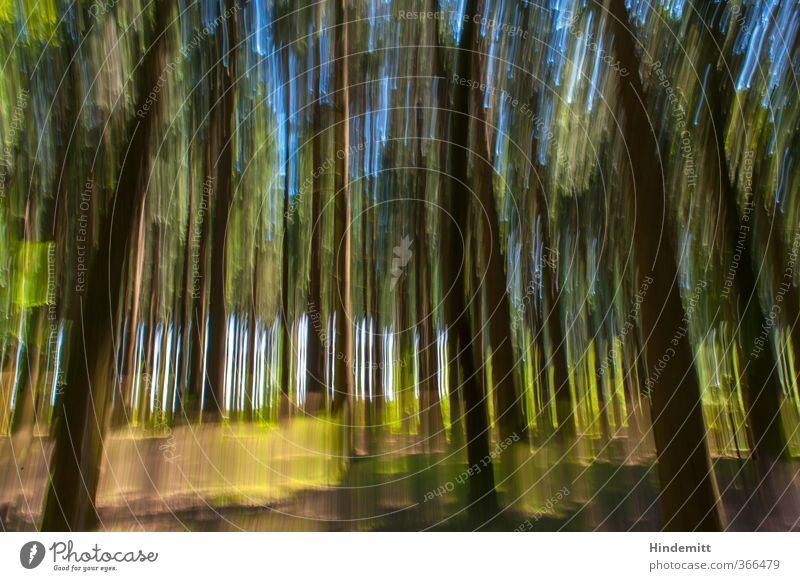 Achtung: Farben nicht hitzebeständig Umwelt Natur Landschaft Pflanze Sommer Schönes Wetter Baum Sträucher Wald Bewegung außergewöhnlich fantastisch hässlich