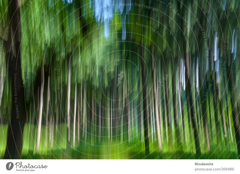 grafisch   gemalt blau grün Pflanze Baum Wald Leben Bewegung braun Geschwindigkeit Schmiererei