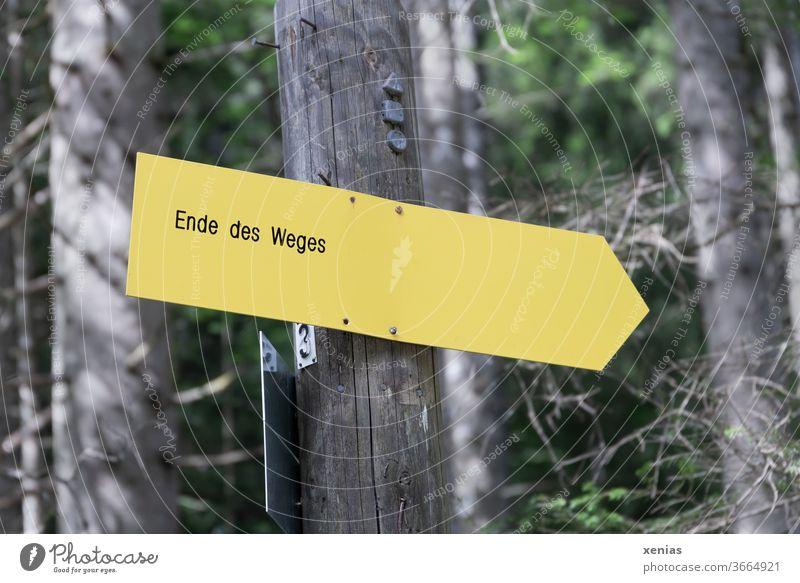 Ende des Weges verkündet das gelbe Schild  im Wald Wegweiser Wege & Pfade Schilder & Markierungen Richtung Hinweisschild Zeichen