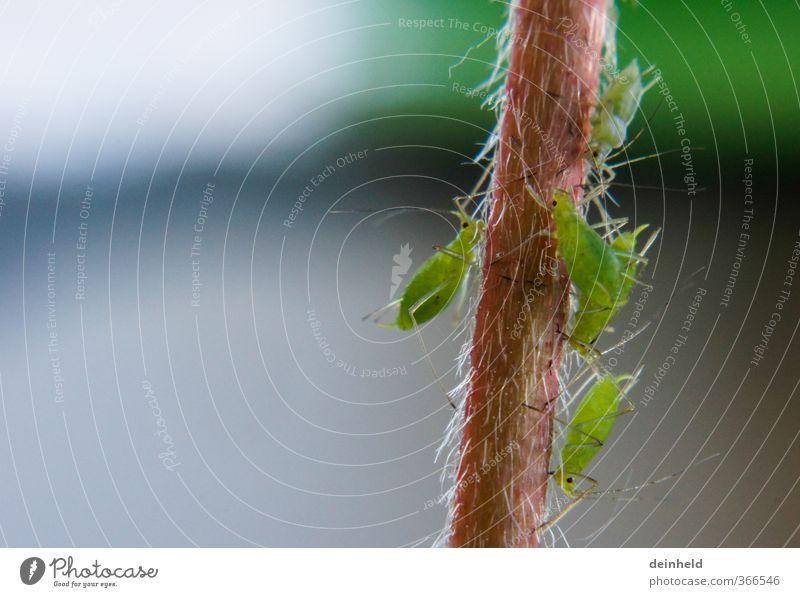 Lausschmaus Natur Pflanze grün Tier Essen natürlich braun Zusammensein sitzen Tiergruppe Zusammenhalt fest gruselig Appetit & Hunger Fressen frech