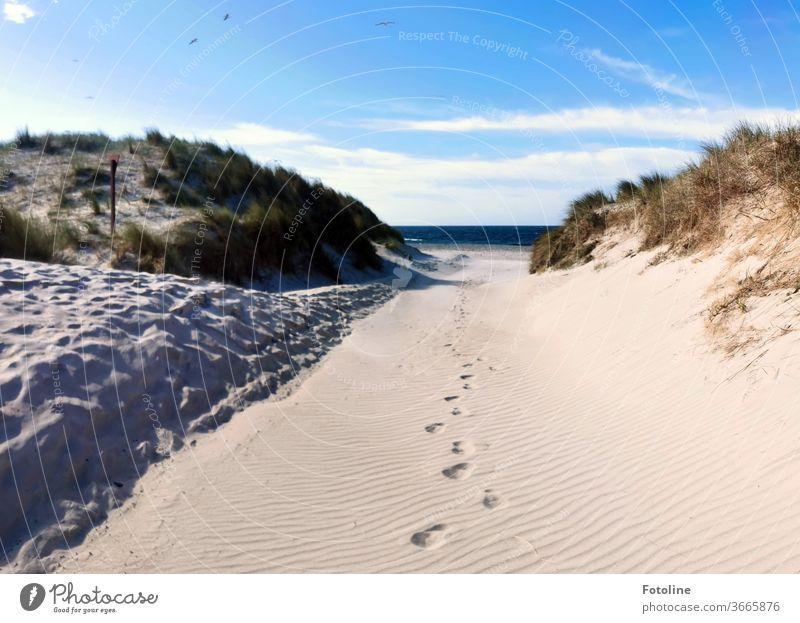 Ganz allein - oder einsame Spuren im Sand auf der Düne von Helgoland Urelemente Boden Erde Himmel Luft Außenaufnahme Farbfoto Natur Tag Umwelt Menschenleer
