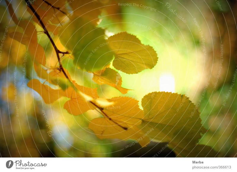 Herbstzeit Natur Pflanze grün Gesunde Ernährung Blatt ruhig Umwelt gelb Herbst natürlich Gesundheit Stimmung authentisch Wind Lebensfreude Ast