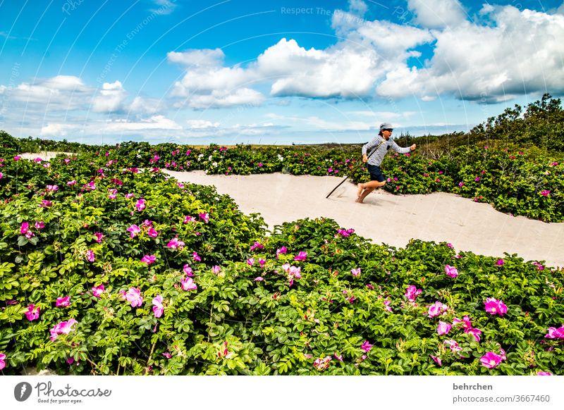 strandläufer Strand Meer Düne Darß Ostsee Blumen Himmel Wolken Natur Landschaft Küste Farbfoto Außenaufnahme Ferien & Urlaub & Reisen Kind Kindheit Spaß haben