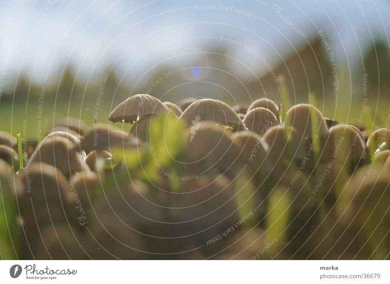 mushroom_city Wiese Gras Zusammenhalt Wohnsiedlung Pilz mushrooms Lichterscheinung Schönes Wetter