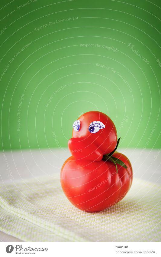 Tomatenente Natur Freude Tier lustig Gesundheit natürlich außergewöhnlich Vogel Lebensmittel Wachstum frisch Fröhlichkeit verrückt Ernährung niedlich lecker