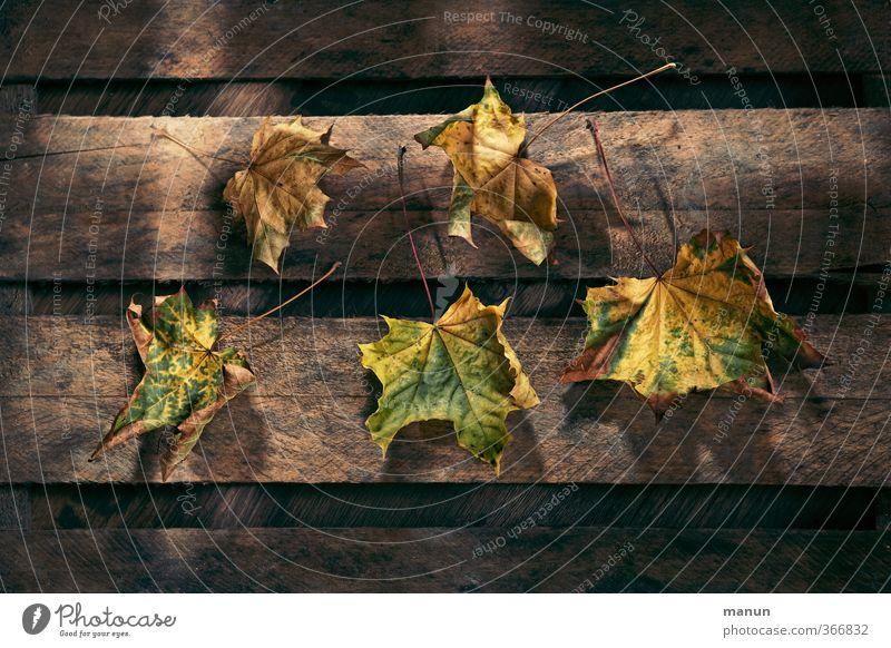 abgeblättert Natur Herbst Blatt Herbstlaub herbstlich Herbstfärbung Holzbrett Holzkiste natürlich trocken Vergänglichkeit Farbfoto Strukturen & Formen Licht