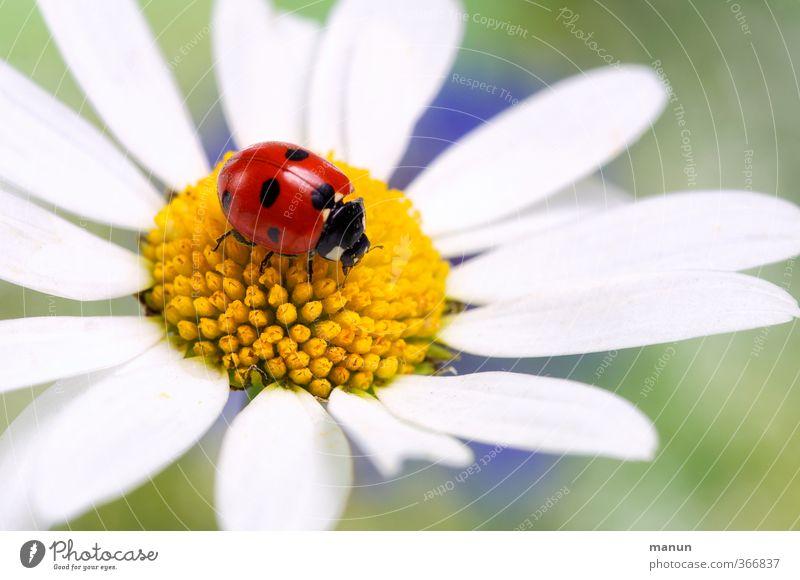 Happy Birthday, Monsieur! Natur Sommer Blume Tier Liebe Gefühle Frühling Glück Blüte Feste & Feiern Freundschaft Geburtstag Hochzeit Hoffnung Zeichen Romantik