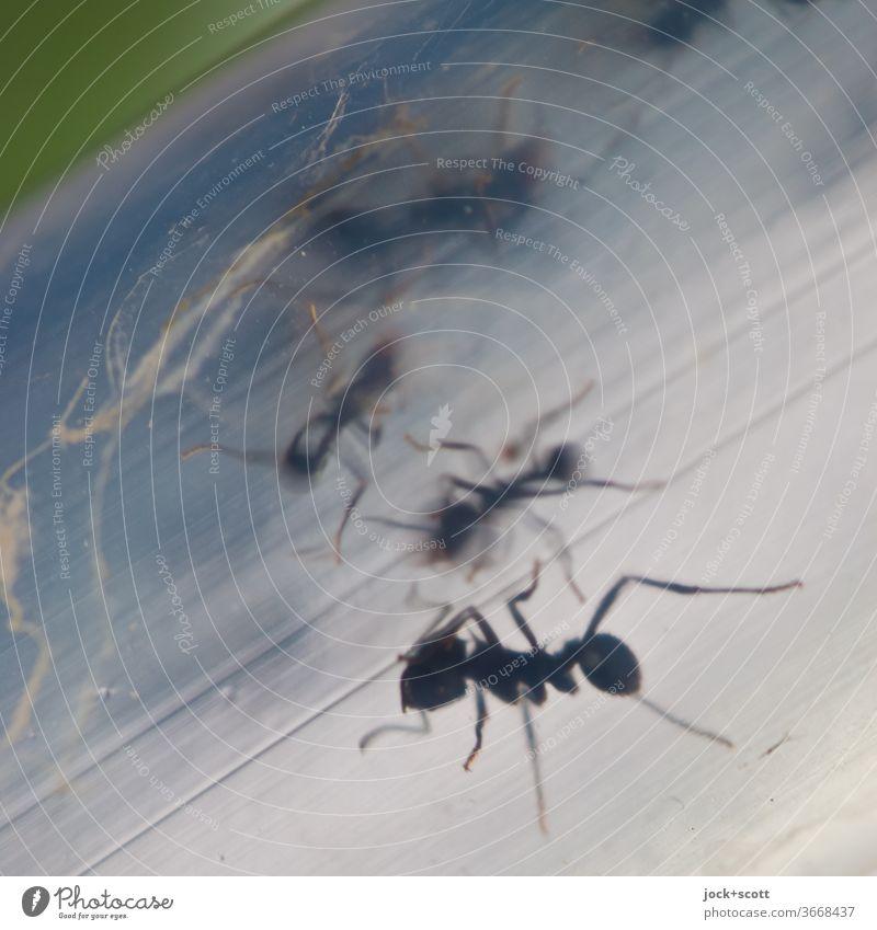 Großes krabbeln im Schlauch Wege & Pfade Ameise Insekt Tiergruppe klein Silhouette Tierporträt Durchgang Leben Ameisenstraße Ganzkörperaufnahme Kunststoff