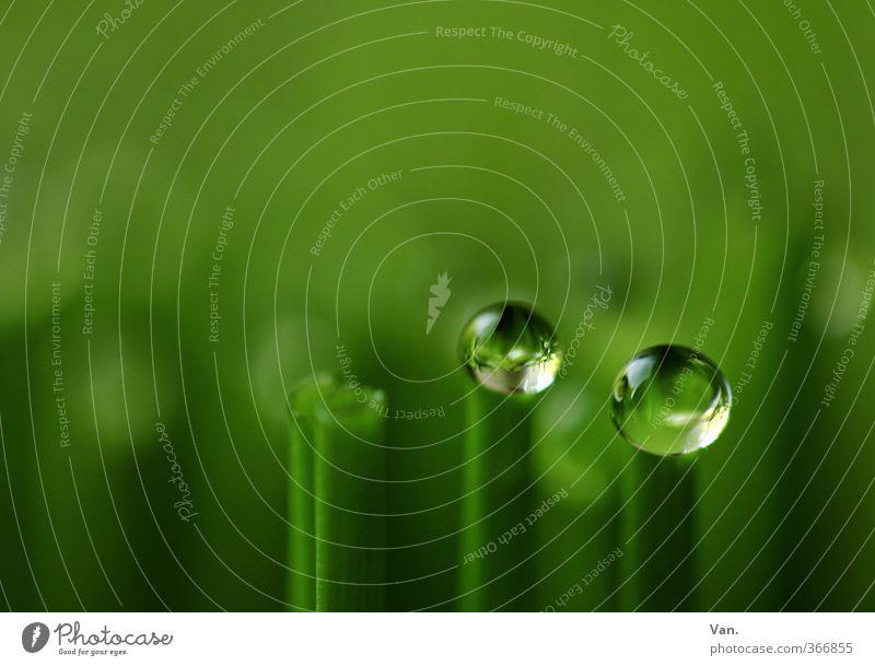 Ioo Kräuter & Gewürze Natur Pflanze Wasser Wassertropfen Frühling Grünpflanze Nutzpflanze Schnittlauch Garten frisch grün nass 2 Farbfoto mehrfarbig