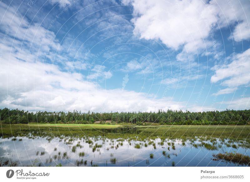 Sumpfsee in der Nähe eines grünen Waldes Feuchtgebiet Landschaft Moos Kiefer wild Schönheit Frühling Holz reisen Park im Freien Bäume Betrachtungen Kumulus