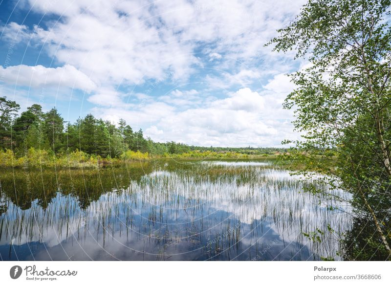 Feuchtlandschaft mit bunten Bäumen Feuchtgebiet Landschaft Moos Kiefer wild Schönheit Frühling Holz reisen Park im Freien Betrachtungen Kumulus dunkel Kiefern