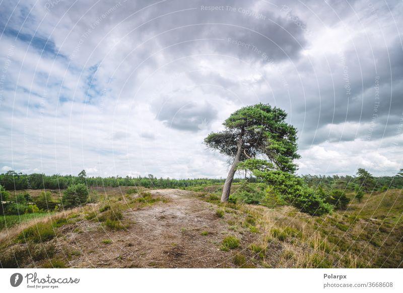 Einsamer Baum in den Ebenen der Wildnis Nordeuropa ruhig malerisch Cloud idyllisch Sommer Laubwerk horizontal fallen farbig pulsierend Wolkenlandschaft Herbst