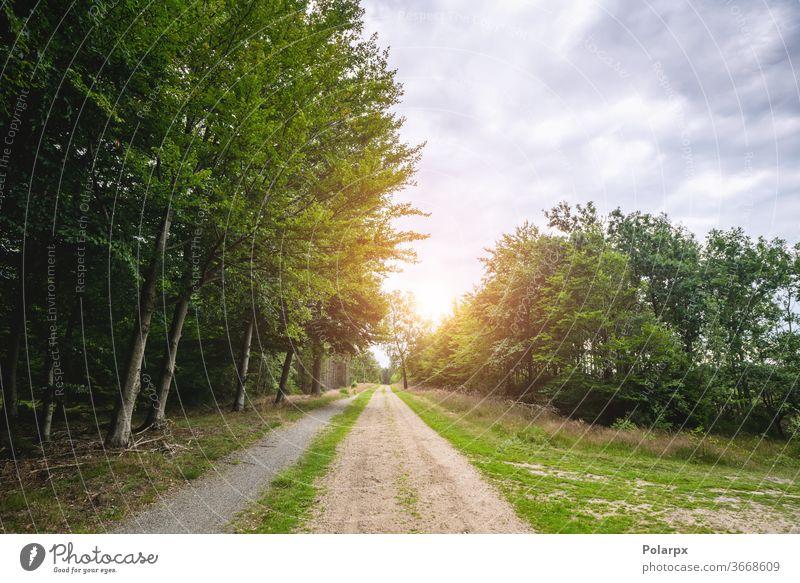 Unbefestigte Straße in einem grünen Wald im Frühling Wasser überflutet fluten wolkig Saison Abenteuer Laubwerk reisen Tourismus Park Berge u. Gebirge Gras