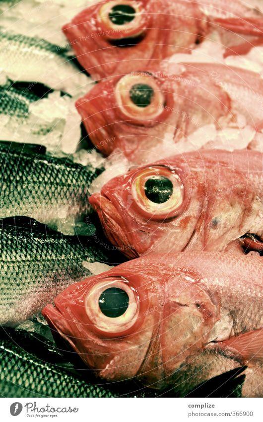 Omega 4 Lebensmittel Fisch Ernährung Diät Gesunde Ernährung Tier kalt Eis Tod Fleisch Auge groß Kühltheke Fischmarkt Fischgeschäft Pargo seebrasse rotbrasse