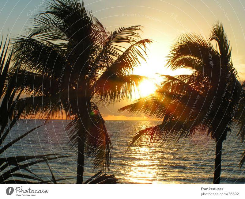 Sonnenaufgang an der Küste von Fort Lauderdale Florida Amerika Palme Strand Miami USA