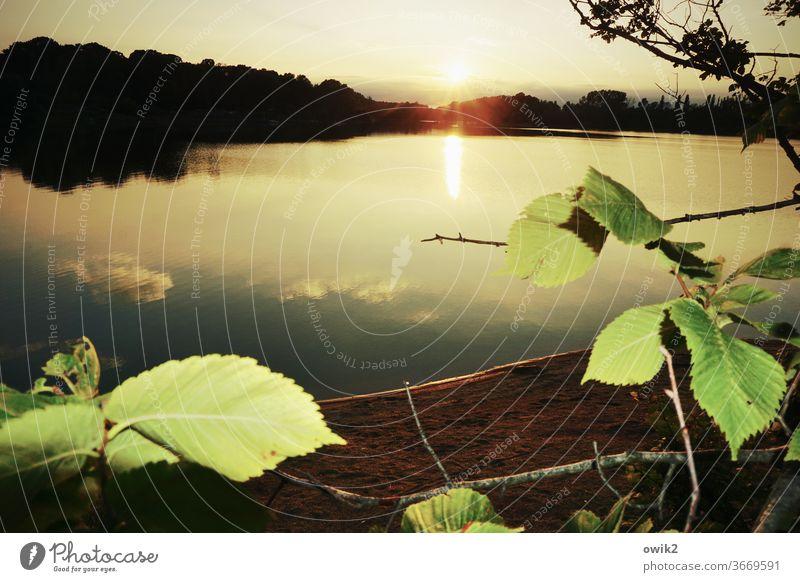 Weit weg See draußen verträumt Abend Blätter windstill geheimnisvoll Bäume Wasser Wasseroberfläche Reflexion & Spiegelung Wasserspiegelung leuchten