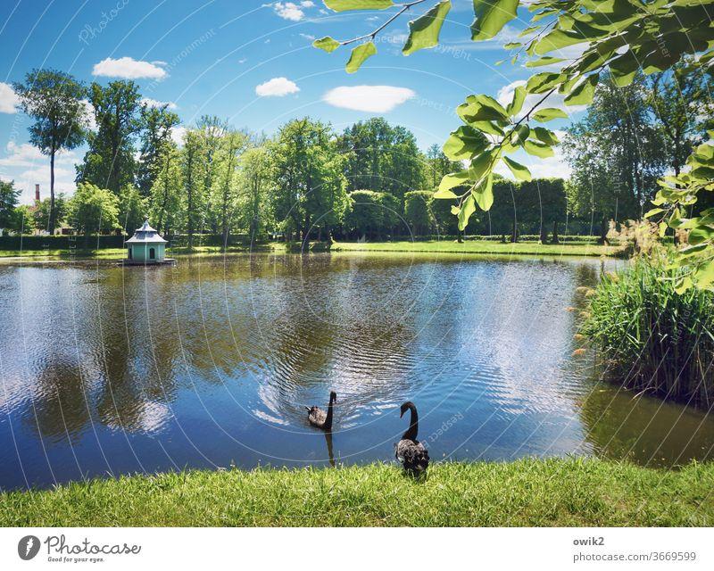 Rangdewu Schwäne Natur Tag friedlich Sonnenlicht Schönes Wetter Ferne Windstille Textfreiraum oben Umwelt ruhig Menschenleer Farbfoto Landschaft Wolken Himmel