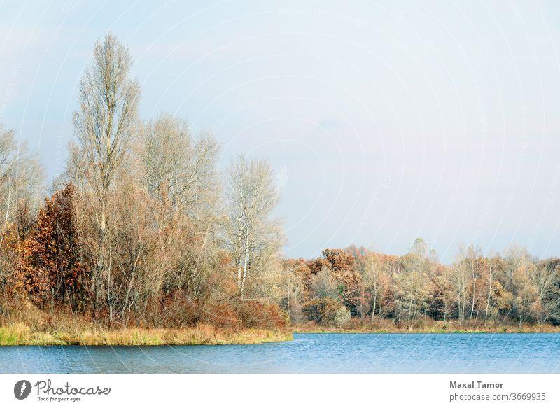 Bäume in der Nähe des Dnjepr im Herbst Kiew kyiv Obolon Ukraine Birke Cloud wolkig fallen Wald golden Gras See Landschaft üppig (Wuchs) Morgen Natur Eiche Teich