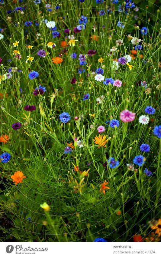 Verschiedene Blumen im Sommer blume blühen blüte erholung ferien garten gras kleingarten kleingartenkolonie menschenleer natur pflanze rasen ruhe schrebergarten