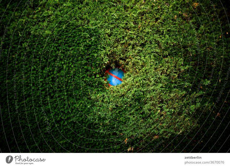 Parkverbot vor der Hecke verkehrsschild garten loch durchblick zugewachsen grenze parkverbot halteverbot nachbar kleingarten kleingartenkolonie menschenleer