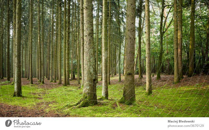 Panoramablick auf einen Wald am frühen Morgen. Holz Natur grün Baum Laubwerk Szene Wildnis wild Kofferraum niemand üppig (Wuchs) ruhig malerisch Waldgebiet