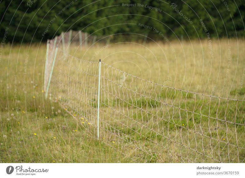Versetzbarer Weidezaun mit elektrischer Spannung Zaun Landwirtschaft Landschaft Gras Farbfoto Sommer Cattle Elektrozaun Draht Pfosten Schutz Hutung hüten Weiden