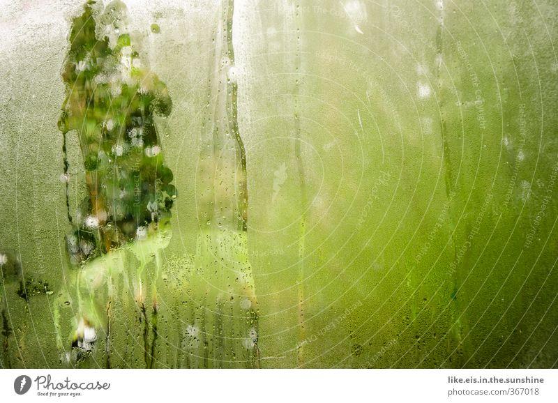 Natur Ferien & Urlaub & Reisen grün Sommer Pflanze Baum Landschaft Blatt Umwelt Regen Nebel Klima Tourismus nass Sträucher Ausflug