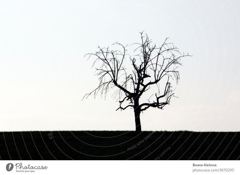 Scherenschnitt: blattloser Baum im Gegenlicht schwarz-weiß kahl Gerippe Äste knorrig trostlos klar schnörkellos Außenaufnahme Zweige u. Äste Herbst Winter Ast