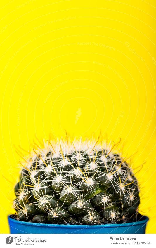 Winziger Kaktus im Topf auf leuchtendem Neon-Hintergrund. Gesättigte Imag neonfarbig Design sehr wenige Mode Minimalismus Sättigung Tonung Aufschwung rosa Kunst