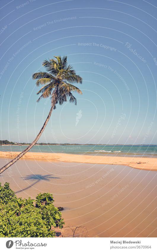 Retro-getontes Bild eines tropischen Strandes mit Kokospalme. Natur Fernweh Flucht Handfläche Sommer retro MEER altehrwürdig gefiltert Instagrammeffekt