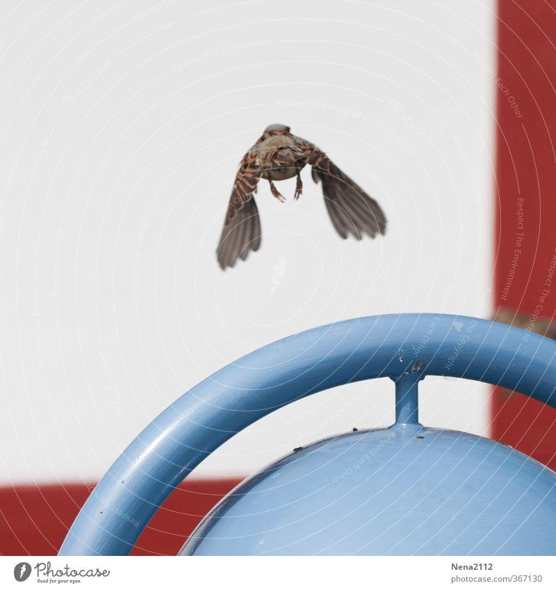 ... abgehauen Ferien & Urlaub & Reisen blau weiß rot Einsamkeit Tier Ferne Leben Bewegung Wege & Pfade Vogel fliegen Geschwindigkeit gefährlich Abenteuer Flügel