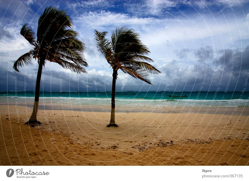 strand meeresalgen und küste im playa paradiso Strand Meer Insel Wellen Sand Himmel Baum Felsen Küste Wasserfahrzeug Stein blau braun gelb grün rot schwarz weiß