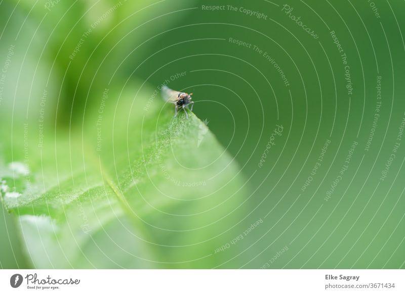 Insekt in Wartestellung... Natur Blatt Pflanze Makroaufnahme Umwelt Käfer krabbeln Menschenleer Außenaufnahme