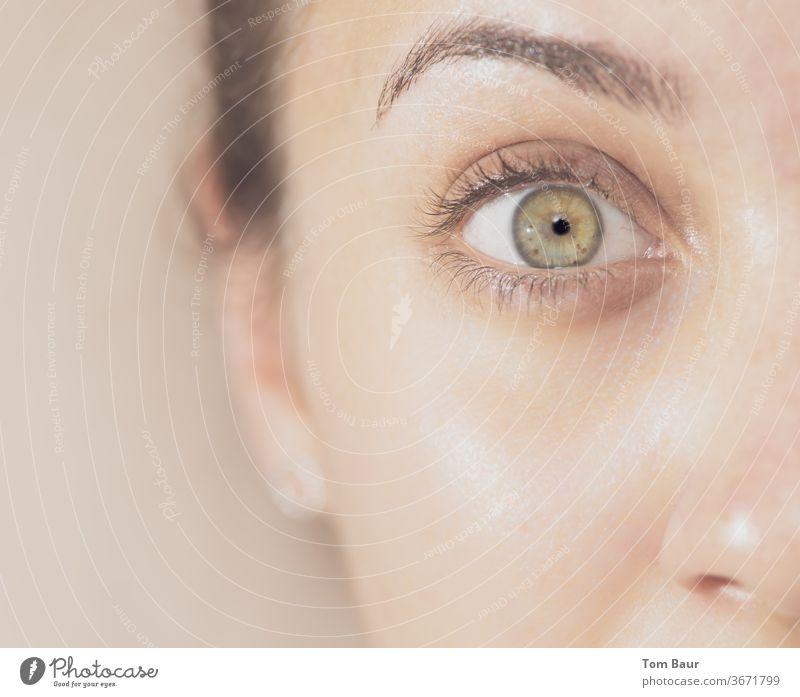 Green eye open Auge Nahaufnahme Iris blass Detailaufnahme Farbfoto Pupille Wimpern Augenbraue Haut Augenfarbe Regenbogenhaut Sehvermögen grün Blick Mensch