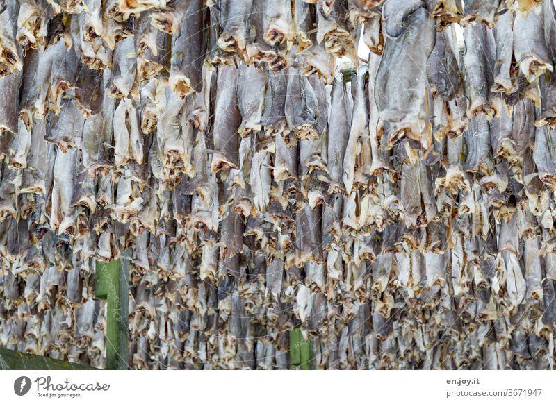 Kopflos abhängen, Stockfisch Fisch trocknen Gestell Lofoten Norwegen Skandinavien Norden Winter aufhängen Kälte Lager Nahrung Essen Ferien & Urlaub & Reisen