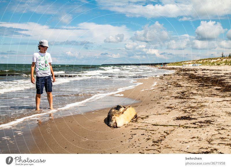 urks...freitagsfisch?! Deutschland Fischland-Darß Tourismus Ostseeküste Mecklenburg-Vorpommern Sommer Kindheit Ferien & Urlaub & Reisen Außenaufnahme Farbfoto