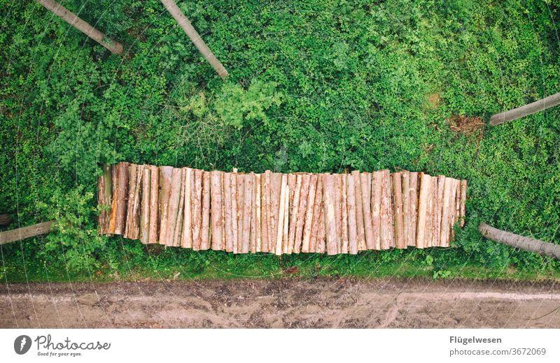 Endlich das 2000ste - Juhuuu! Jubiläum Wald Waldboden Waldlichtung Waldrand Waldwiese Waldspaziergang Waldsterben Waldstimmung Nadelbaum Nadelwald