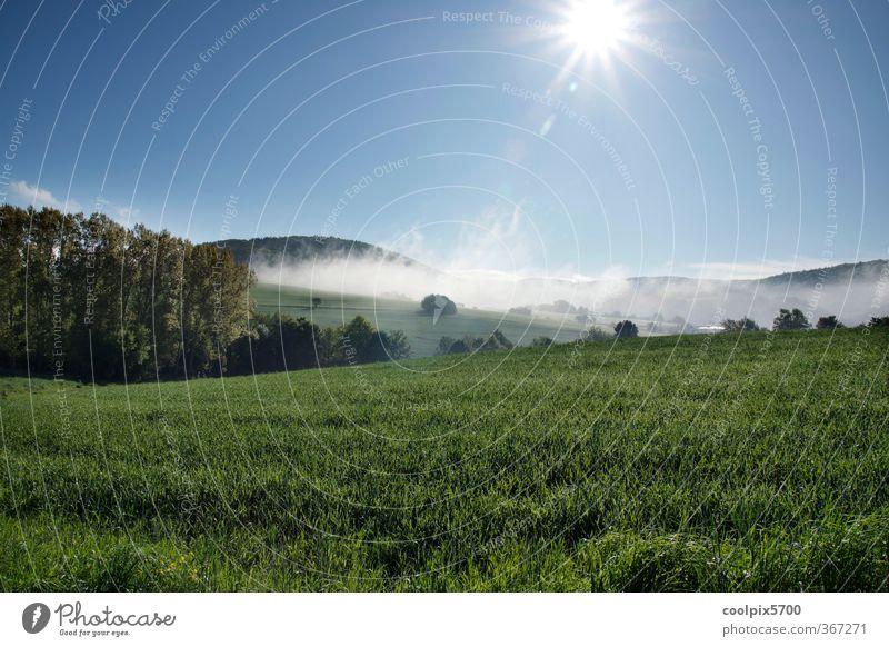 Durstige Sonne Himmel Natur blau grün Wasser weiß Pflanze Landschaft Tier Wald Berge u. Gebirge Gras Frühling Feld Nebel