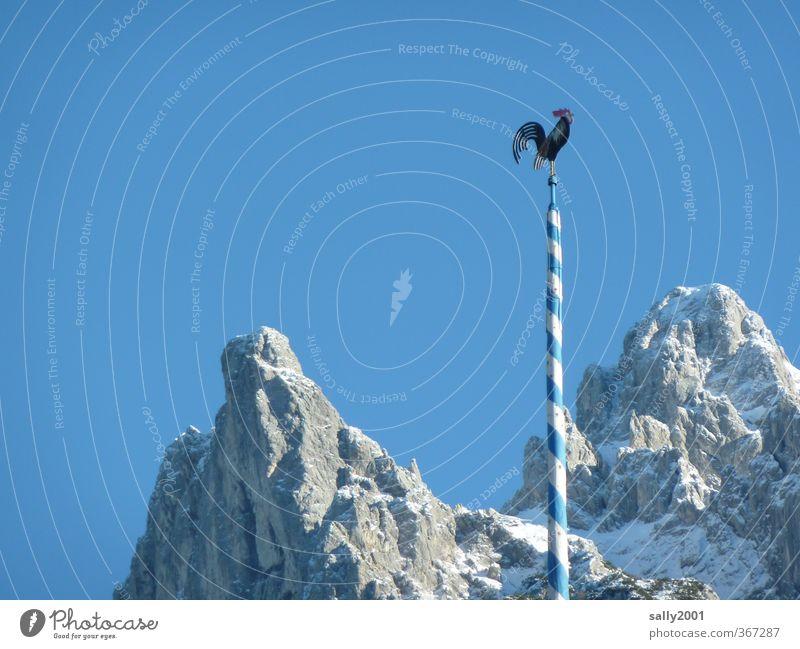 letzter Hahn vorm Gipfel... Natur blau weiß Winter Berge u. Gebirge Freiheit wandern hoch Schönes Wetter rund Alpen Symbole & Metaphern Schneebedeckte Gipfel