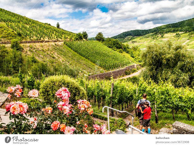 moselparadies Wolken Himmel genießen Mann Hunsrück Moseltal Sonnenlicht Mosel (Weinbaugebiet) Rheinland-Pfalz Ruhe Idylle Fluss Weinstock Weinrebe Weintrauben