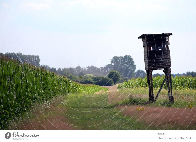 Restalkohol lanschaft hochsitz weg horizont schief mais Landwirtschaft busch baum sonnig waldrand himmel schatten trashig kaputt achtung vorsicht