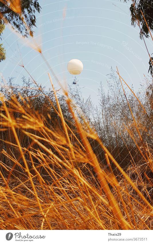weißer fliegender Ballon Ballon über einem goldenen Grasfeld gelber Sonnenschein Panorama Goldenes Gras Herbstfarben sonnengelb quietschgelb Herbstgelb