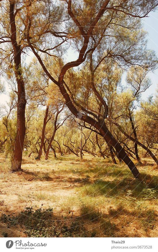 Baumzweige im gelben Sonnenlicht, heißer sommerlicher Sonnentag zwischen den Bäumen malerisch Äste Stammbaum Zweig Baumschmuck Blätter hoch Blick im Freien Holz